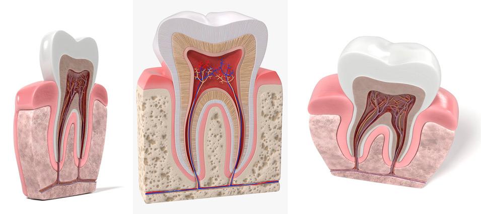 tratamiento-endodoncia-en-toledo-2